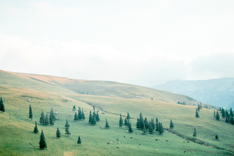 Mountain top shoot by andreea alexandroni-19